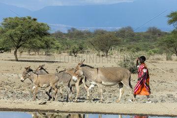 Masai woman coming to drink his donkeys - Lake Magadi Kenya