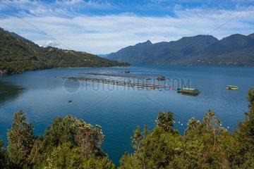 Salmon Aquaculture - Bahia Ralun Chile