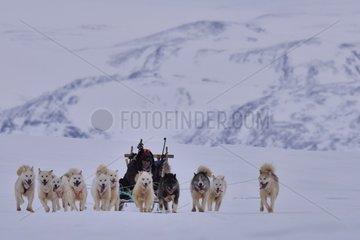 Professional hunters going on a bear hunt  february  Igterajivit distrcit  East Greenland