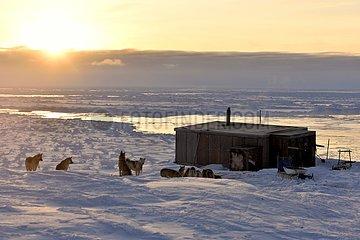 Hut and dog team in Unarteq  Greenland  February 2016