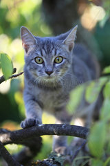 Portrait of a 4 month old kitten on a branch
