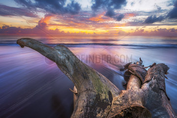 Dead tree washed up on beach of northern Mayotte  Indian Ocean