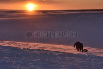 Hunters pulling bear meat in a sledge. Igterajivit district in February  eastern Greenland