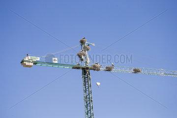crane colonized by white stork nests  abandoned yards following the economic crisis  Lerida  Catalonia  Spain