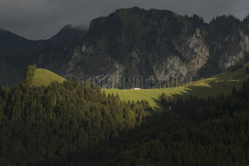 Landscape  mountain pastures and cows in the Friborg pre-Alps  above Charmey  Switzerland