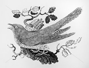 Common Cuckoo wood engraving
