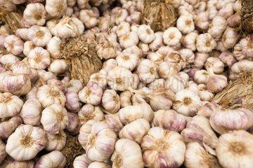 Garlic wholesale market Corbas France
