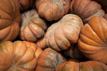 Squash the wholesale market Corbas France