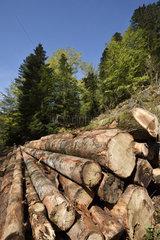 Forest  fir and spruce logs  Ballon d Alsace  Territoire de Belfort (90)  France