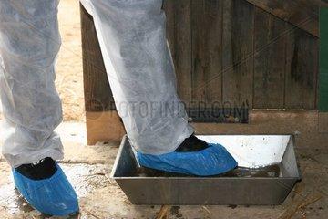 Soigneur passant par un pédiluve désinfectant anti - H5N1