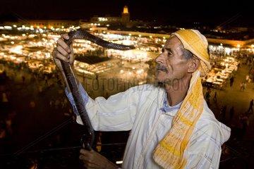 Snake charmer with an Egyptian Cobra Morocco