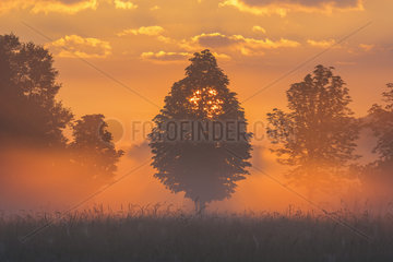 Trees in morning mist at sunrise  Hesse  Germany  Europe