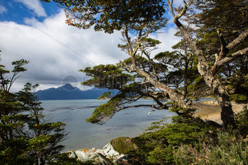 Lengas forest - National Park Tierra del Fuego Argentina