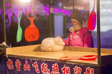 Arctic fox for photos  Harbin International Ice and Snow Sculpture Festival  Heilongjiang  Manchuria  China