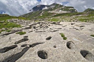 Limestone rich Cerithes - Desert Platé Alpes France