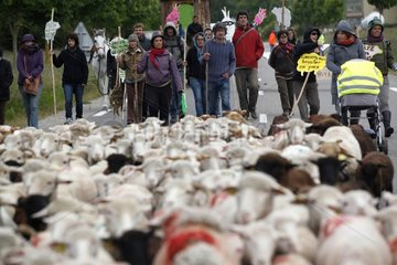 Transhumance in the resistance against chipping sheep