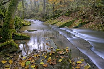 Montenach creek in autumn - Lorraine France