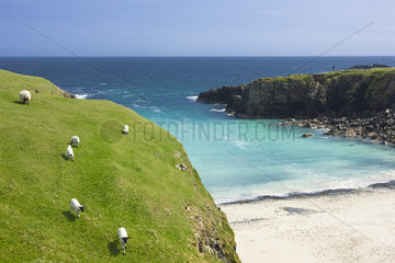 Sheeps in front of ocean  Butt of Lewis  Isle of Lewis  Hebrides  Scotland