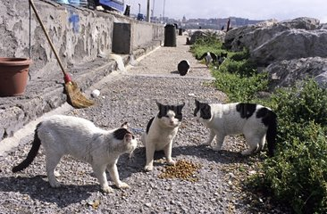 Cats eating food lodged Naples Italy