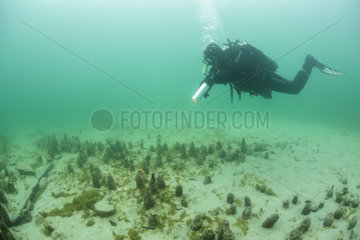 Archaeological excavations at a place of Roman worship in Lake Bourget  Savoie  France