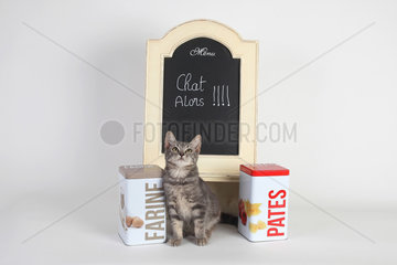 Kitten in front of a slate and food boxes on white background