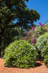 Park Rose Garden - Buenos Aires Argentina