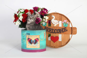Kitten sitting in a colored box on white background