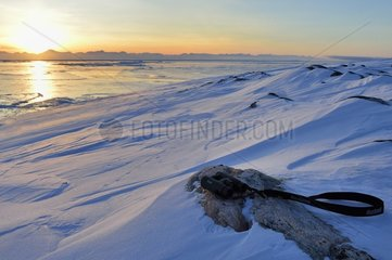 Binoculars on the ground. Scoresbysund in the distance and arctic hare tracks  Greenland