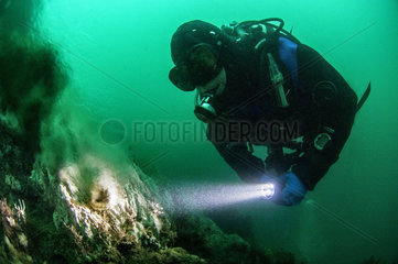 Diver in front of hot underwater hydrothermal source. The submarine volcanic chimneys of Strytan  located in the middle of the Eyjafjord Fjord  rise up from -70m up to 15m from the surface in a mixture of boiling volcanic water and cold sea water that attracts A rich and varied fauna. The Strytan site has been classified as a nature reserve since 2001  Iceland