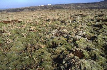 Paysage de Crozet Terres Australes &Antarctiques Françaises