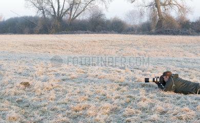 Brown hare (Lepus europaeus) Hare and photogragher amongst Frozen grass  Aston Clinton  England  winter