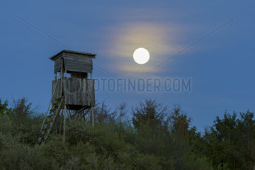 Hunting Blind at Full Moon  Odenwald  Hesse  Germany  Europe