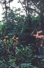 Huaorani man hunting blowgun to Ecuador