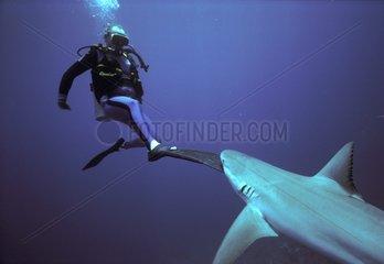 Requin de récif attaquant un plongeur Bahamas
