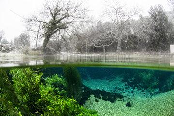 Aquatic vegetation and bank under snow  Bueges spring  Occitania  France