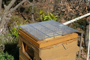 Warré hive. Queen excluder. Apiary Porte Rouge. Levens. Alpes-Maritimes. France