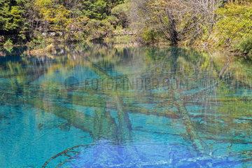 Colorful lake  Jiuzhaigou valley  Sichuan  China