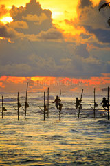 Stilt fishermen near the beach at sunset  traditional fishing  Weligama  Indian Ocean  Sri Lanka