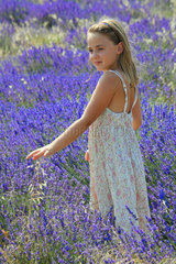 Little girl in a field of lavender  Provence  France