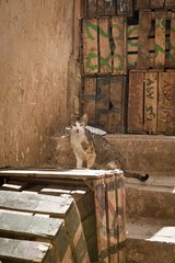 Cat and crates in an alley of the Medina - Fez Morocco