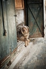 Dog lying in an alley in the Medina - Fez Morocco