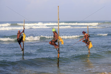 Stilt fishermen near the beach  traditional fishing  Weligama  Indian Ocean  Sri Lanka