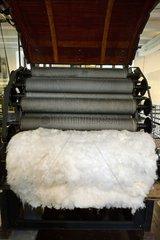 1900 hedgehogs teasel  Textile Museum   Ventron   Vosges  France