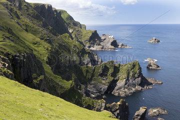 Hermaness rocky shore  Shetland  spring