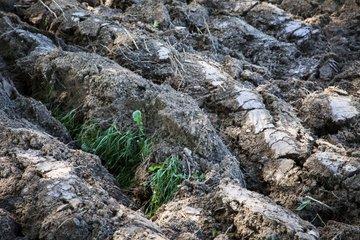 Rest of weed vegetation after plowing - Verdon France