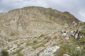 Habitat of Spider-tailed horned viper (Pseudocerastes urarachnoides)  Zagros Mountains  Ilam Province  Iran