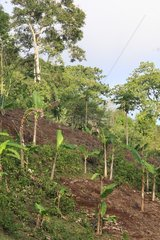 Deforestation and slash and burn agriculture in Mayotte
