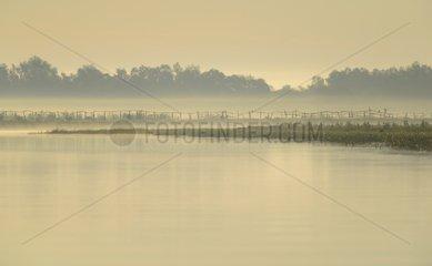 Morning mood in the Danube Delta  Danube Delta  Romania