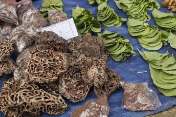 Termit nests used as traditional medicine - Borneo Indonesia