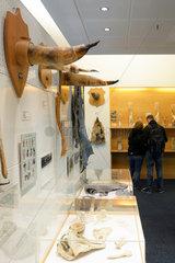 Penis Museum - Reykjavik Iceland